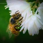 かっこよくハチ撮り