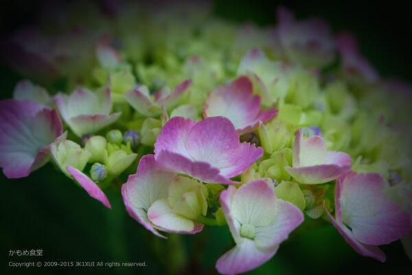 淡いピンクと淡いグリーンのコラボ