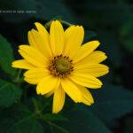 花のレタッチ